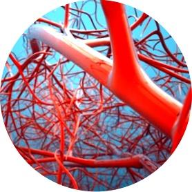 Тромбы в микроциркуляторном русле